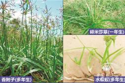 恒达登录_园林植物防除杂草需要这样操作