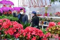 恒达娱待遇_西北内陆城市兰州万紫千红春意浓 市民可线上选购花卉