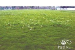 恒达平台登录_卓尔套除———封杀结合,解决暖草中的杂草防除难题