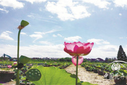 恒达登录地址_中国水生植物黄金期还将持续10年