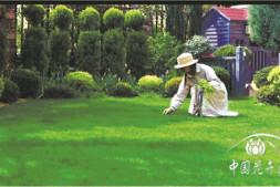 """恒达代理平台_让人""""怦然心动""""的草坪是如何建植与养护的"""