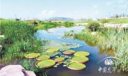 恒达公测_水生植物产业面临的问题及对策