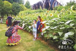 恒达平台_郑州植物园举办2020向日葵展