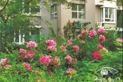 """恒达娱待遇_退休专家来帮忙这个社区建起""""植物园"""""""