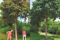 恒达正规么_高工效园林植保是如何把病虫害防治变得轻松高效简单的(下)