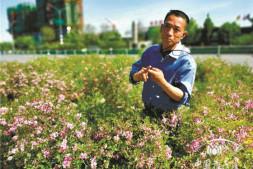恒达平台登录_【苗木品种山东行】魏玉龙的品种梯队