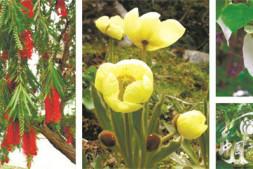 恒达登录_特有、濒危物种保护与国花的设立