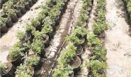 恒达公测_从金叶榆到月季 七彩园林绿化工程有限公司探索中求转型