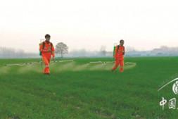 恒达娱待遇_高工效园林植保是如何把病虫害防治变得轻松高效简单的(上)