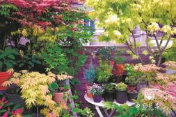 恒达娱待遇_私家花园有哪些植物新需求?