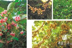 恒达注册平台_乡土植物的引种驯化和选育