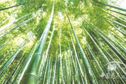 恒达注册账号_优秀的竹景观是如何练就的