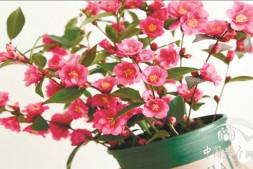 恒达登录地址_用花灌木营造一个四季有花的花园(上)