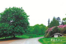 恒达正规么_冠大荫浓的佛门圣树———七叶树