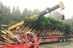 恒达登录_温江一季度花木销售大幅下滑