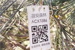 恒达登录_标的超过7亿元今春雄安造林工程花落谁家?