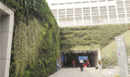 恒达公测_如何利用水苔做好植物墙