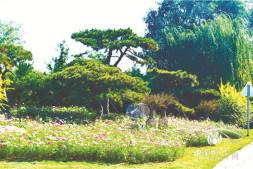 恒达招商_一幅蓬勃激昂的百里画卷 记山东省青岛市城阳区机场周边及其他重要道路绿化提升项目一标段