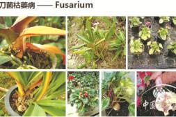 恒达登录地址_如何高效防治园林植物根茎部病害