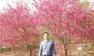 恒达娱待遇_叶超宏:樱花产业要多走新路多开新花