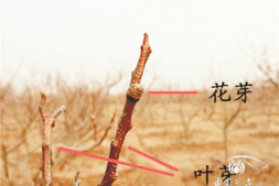 """恒达娱待遇_园林植物谨防""""倒春寒"""""""