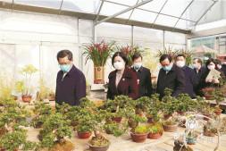 恒达开户测速_江苏省委领导考察如皋花木盆景产业