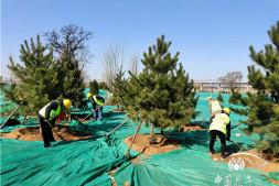 恒达登录_今年全市将增绿20万亩,新增城市绿地700公顷 北京春季绿化造林将有序开工