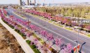 恒达开户测速_'四季春1号'紫荆树西安园林应用赏析