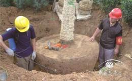 恒达代理平台_夏季树木移植技术及管理方法(上)
