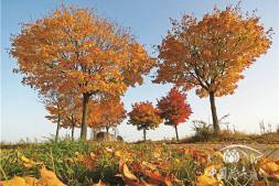 恒达注册登录_苗木在景观中到底应该处于什么样的地位?