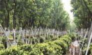 恒达招商_订单型苗圃除了订单还有什么? 记广东中山美桦园林绿化有限公司