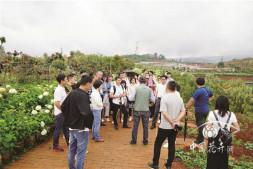 恒达开户测速_2019绣球属植物学术研讨会在昆明召开
