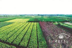 恒达登录_杭州市萧山区花木产销形势分析