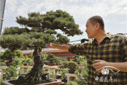 恒达注册账号_如皋龙飙:不吃早饭的盆景大师