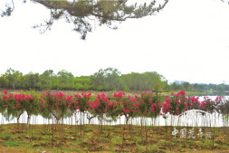 """恒达注册账号_采沙场上崛起的首都""""后花园"""" 记北京昌平新城滨河森林公园"""