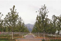 恒达娱待遇_反季节栽树如何做到100%成活率