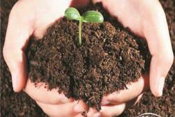 恒达登录_什么样的营养土可养一方树木