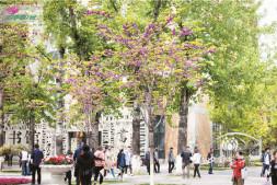 恒达开户测速_紫荆树在北京的应用