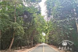 """恒达注册_柬埔寨的""""高树公路"""""""