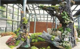 恒达平台登录_厦门植物园收集500种秋海棠属植物