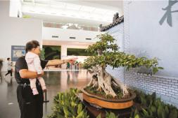 恒达注册登录_中国园林博物馆赏石盆景展精彩呈现