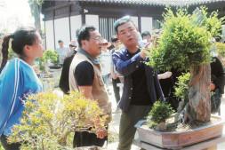 恒达信誉吗_河南商丘举办唐庆安盆景艺术展