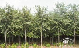 恒达平台_苗木产品的时代论