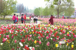 恒达娱待遇_花卉旅游新风向:在专业土壤迸发更多可能