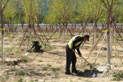 恒达信誉吗_北京新增造林17.8万亩已完成近八成全年造林任务