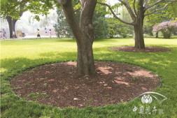 恒达注册账号_彩色有机覆盖物在颐和园中的应用(下)