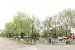恒达登录地址_园林建设中盆景要素的应用
