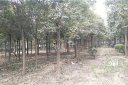 恒达代理平台_河南:未来可期缺口促发苗圃升级