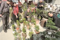 恒达平台登录_湖北襄阳小型树木盆景旺销