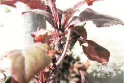 恒达正规么_北方春季园林植物病虫害防治要点